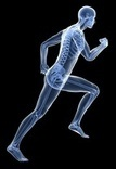 Image of x-ray running man to depict myofascial system in the body.